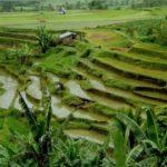 Необходима ли виза при въезде Индонезию?